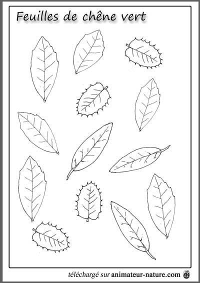 outils p u00e9dagogiques  u00e0 imprimer sur le th u00e8me des feuilles