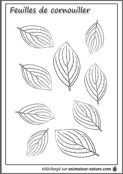 Coloriage Arbre Hetre.Outils Pedagogiques A Imprimer Sur Le Theme Des Feuilles