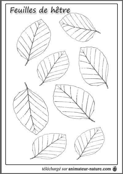 Outils p dagogiques imprimer sur le th me des feuilles - Feuille d arbre a imprimer ...