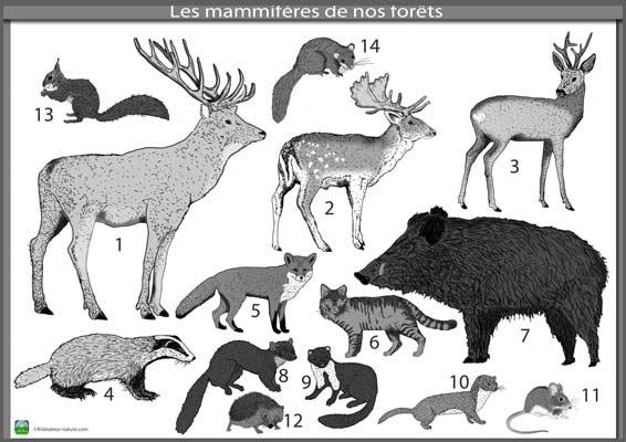 Beliebt Séquence : LA FORET - les animaux/les végétaux • ReCreatisse XK15