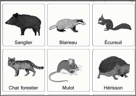 Beliebt Outils pédagogiques à imprimer sur le thème des animaux XK15